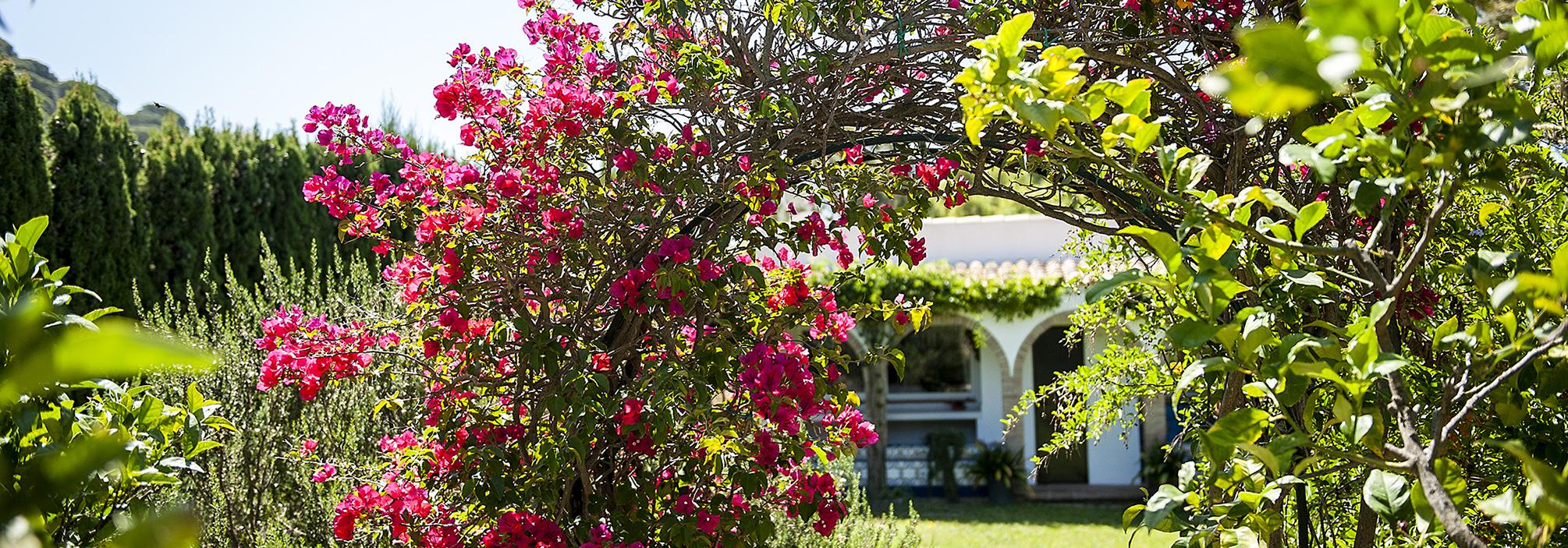 Casa  de encanto en el campo de Tarifa
